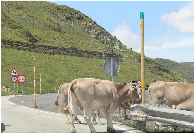 A mountain traffic jam.
