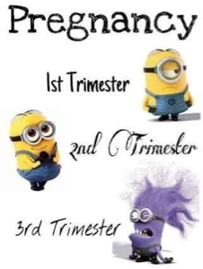 three trimesters